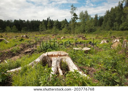 trunk after deforestation  - stock photo