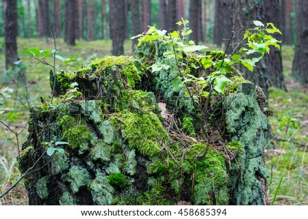 trunk covered with moss
