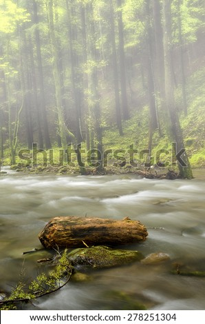 trunk in the river bed - stock photo