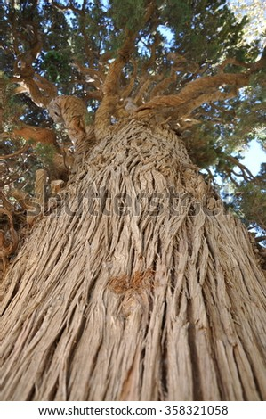 trunk of an old tree, Iran - stock photo