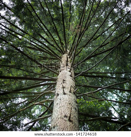 trunk of douglas fir  - stock photo