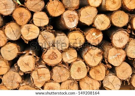 Trunk of eucalyptus tree - stock photo