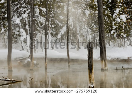 Trunks of burnt trees standing in a steaming small lake with snow-covered banks. Yellowstone National Park. - stock photo