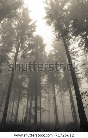 Trunks of trees in a misty forest - stock photo