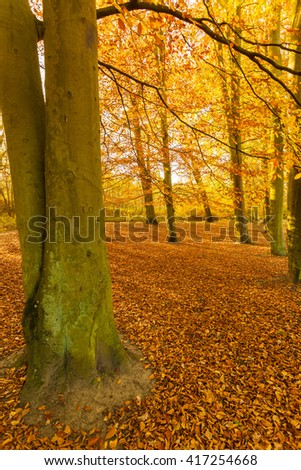 Trunks of trees in forest. Autumnal vegetation in woodland. Nature fall season concept.