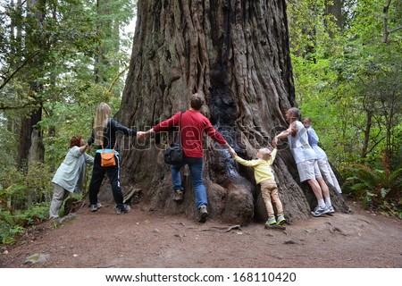 Try to embrace giant sequoia - stock photo