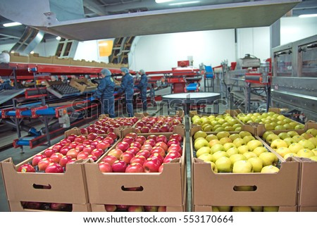 "Trybuhivtsi, Ukraine â?? December 14, 2016: Apples in boxes at factory in agroindustrial company ""Gadz"" in Ternopil region."