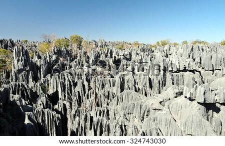 Tsingy de Bemaraha National Park. Unesco World Heritage in Madagascar - stock photo