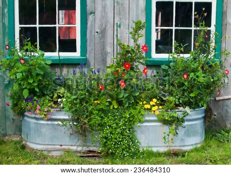 tub of flowers against a rustic barn