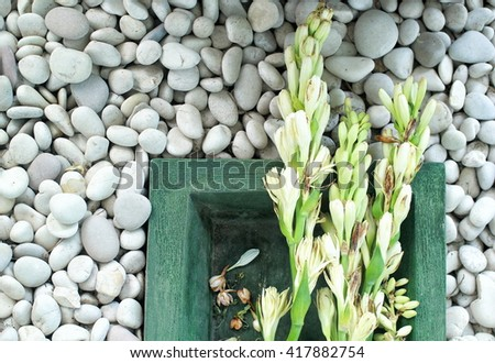 tuberose flower on a stone white