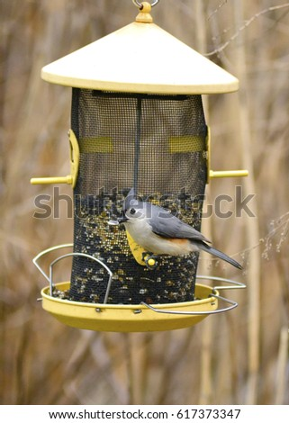 Titmouse Stock Images Royalty Free Images Amp Vectors