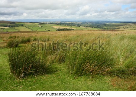 tufts of grass in Yorkshire Moors - stock photo