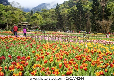 tulip. Beautiful bouquet of tulips. colorful tulips. tulips in spring sun. tulip in the field - stock photo
