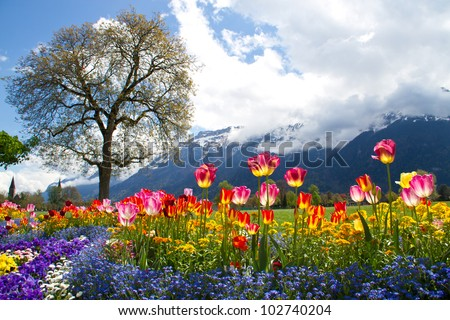 Tulip beds and beautiful landscaping in front of the Swiss Alps - stock photo