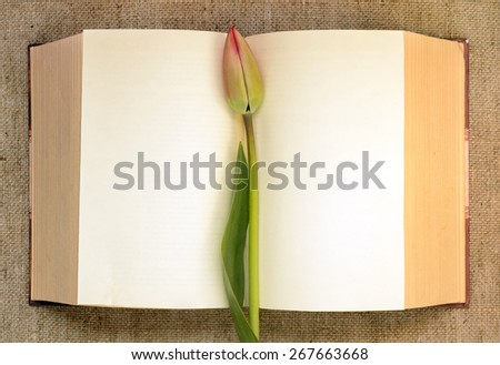 tulip bud on the background of the open book - stock photo
