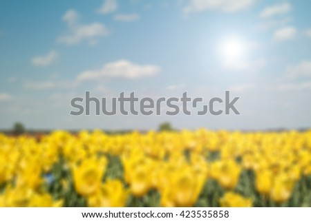 Tulip field blur background. Defocused image, blur of field with yellow tulips. Group of yellow tulips in the park. Spring landscape. - stock photo