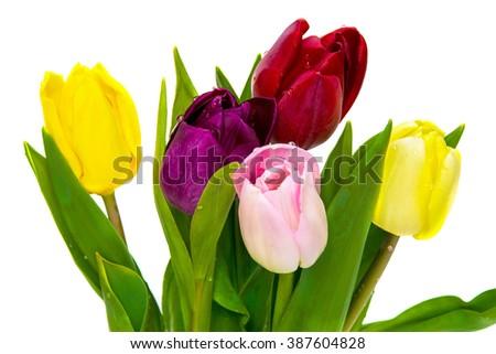 Tulip flower bouquet isolated on white background - stock photo