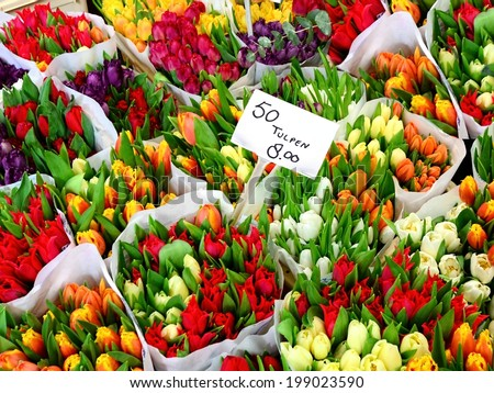 Tulip flowers for sale at a Dutch flower market - stock photo