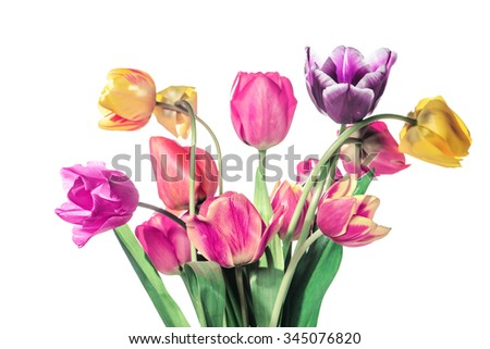 Tulip flowers isolated. Vintage effect - stock photo