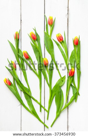 Tulip flowers on white wooden background. - stock photo