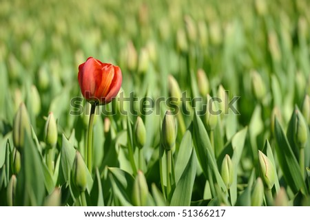 Tulip is standing out from the crowd.