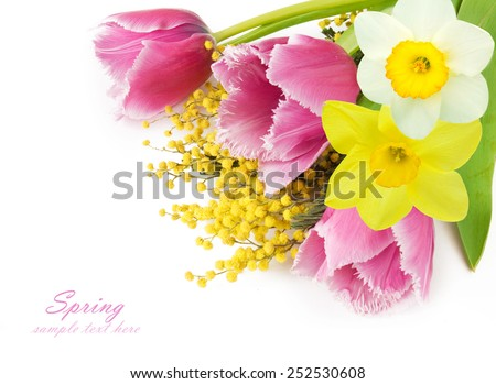 Tulip, mimosa and narcissus flowers background isolated on white with sample text - stock photo