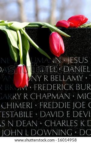 Tulips and Vietnam Memorial - stock photo