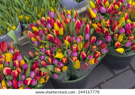 Tulips at the flower market in Amsterdam, Netherlands.