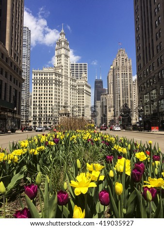 Tulips bloom along Michigan Avenue in downtown Chicago. Chicago, Il. 25 April, 2016
