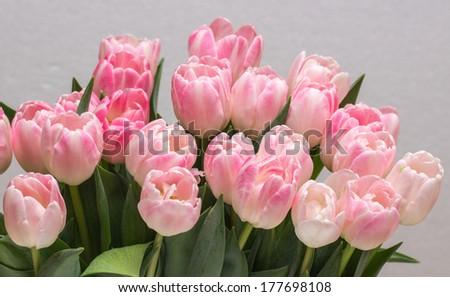 tulips bouquet - stock photo