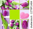Tulips collage - stock photo
