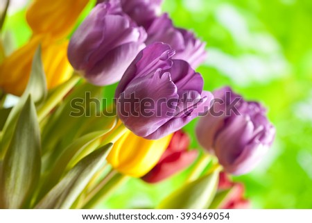 Tulips - Colorful flowers on nature background - stock photo