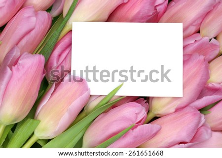Tulips flowers in spring or mother's day with empty greeting card and copyspace for your own text - stock photo
