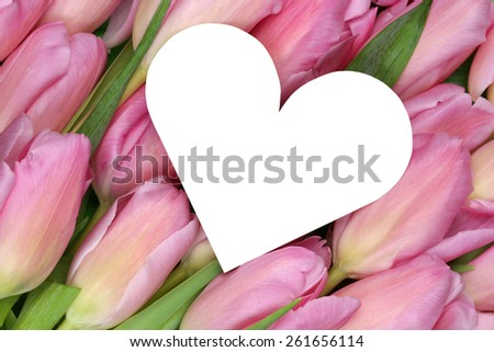 Tulips flowers with heart as symbol of love on mothers or Valentine's day with copyspace for your own text - stock photo