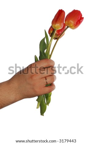 Tulips in hand isolated on white background