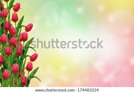 Tulips in the colorful background