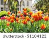 Tulips in Topkapi Palace, Istanbul, Turkey - stock photo