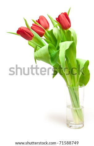 tulips isolated on white - stock photo