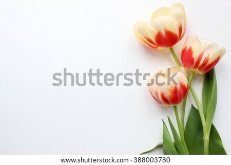 Tulips Mockup. Post blog social media. Top view with blank space. Banner template layout mockup. Simple white background - stock photo