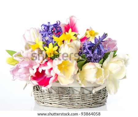 tulips, narcissus and hyacinth. colorful spring flowers in basket over white background