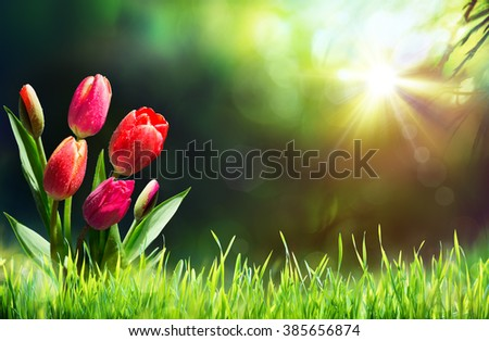 Tulips On Grass In Sunny Meadow With Sunlight  - stock photo