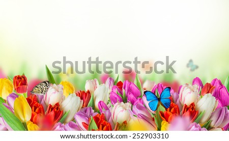 tulips over blurred green background and exotic butterflies, bouquet of spring easter flowers. - stock photo