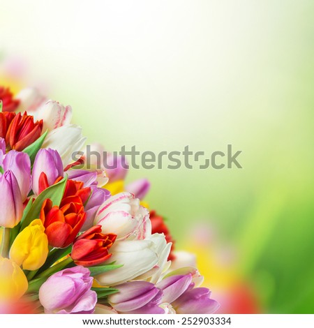 tulips over blurred green background, bouquet of spring easter flowers. - stock photo