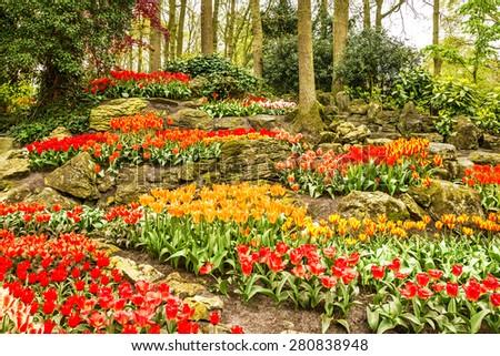 Tulips park Keukenhof - flower garden in Holland - stock photo