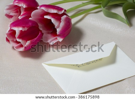 Tulips with the semi-opened buds and an envelope with the letter for darling on a spring holiday - stock photo
