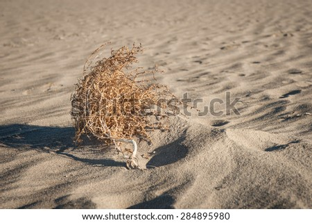 Tumble weed lays in the sand of Death Valley National Park in California. - stock photo