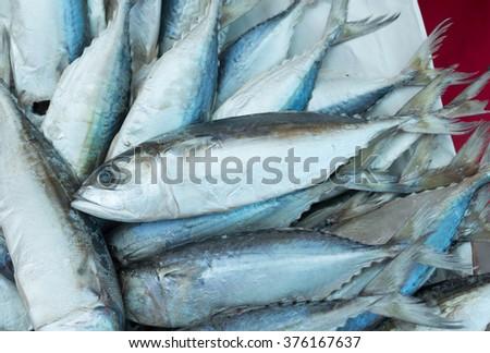 Eastern little tuna - photo#20