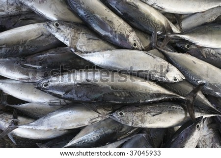 Tuna fish at market in Muscat, Oman - stock photo