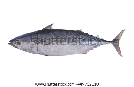 Tuna fish isolated on white background