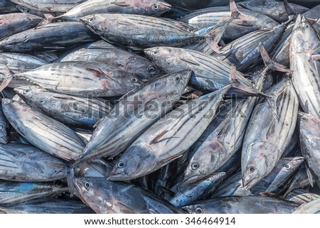 tuna newcomers to port ready for sale - stock photo